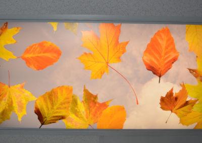 decorative-light-cover-leaf