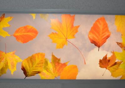 Leaves light cover